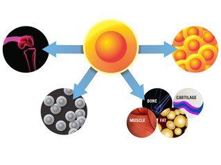 Stem Cell Therapy In Scottsdale Arizona   Regenerative Medicine
